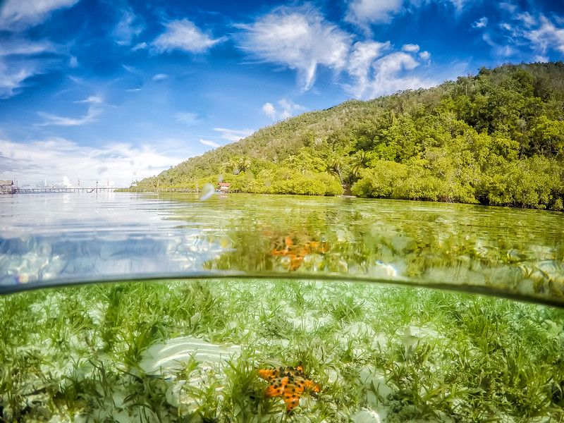 Raja Ampat Islands Star Fish