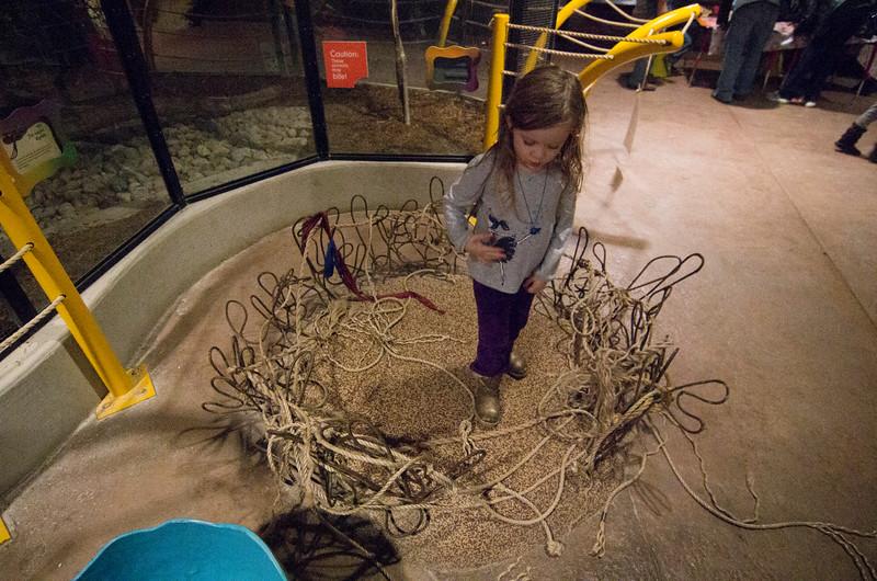 Toledo Zoo Light Show - 2014 - _CAI4544.jpg