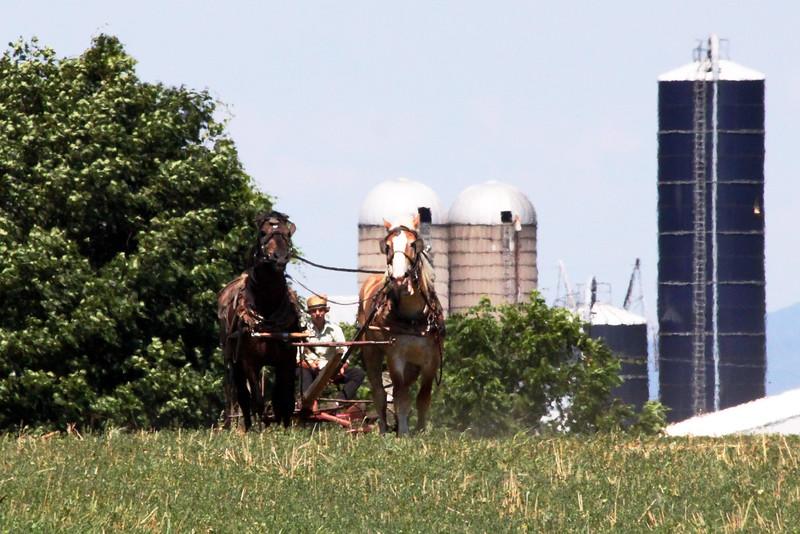 IMG_0990 two horse team & silos.jpg