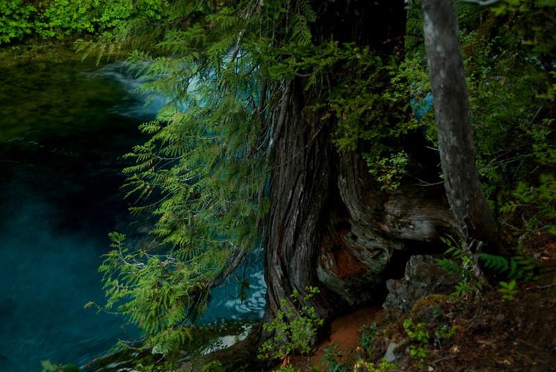 KateThomasKeown McKenzie River Blue_DSC9041 copy.jpg