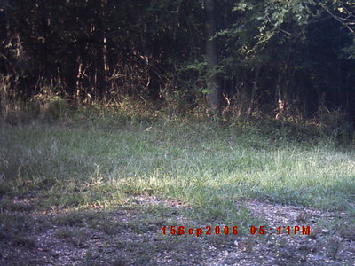 Whitetail Deer Around Our Home