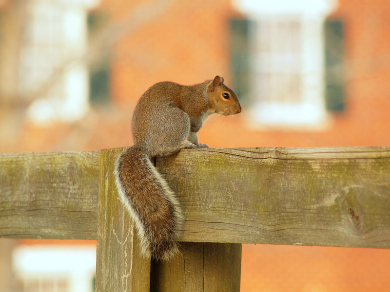 Squirrel-009.JPG