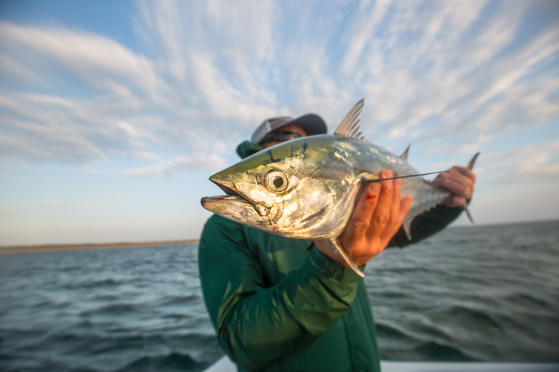Eyes are the windows to an abie fisherman's soul. Chasing Martha's Vineyard False Albacore During the MV Derby