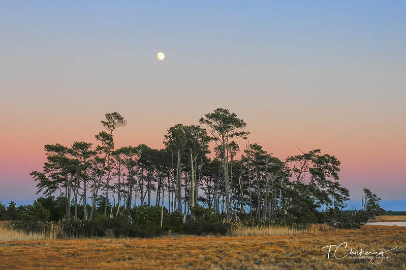 Chincoteague Moon Rise Two-1512777590787.jpg