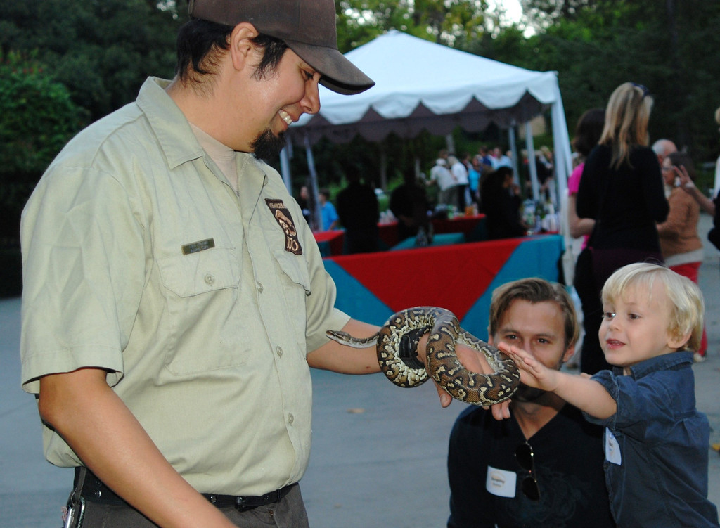 . Little Jacoby Bailey, age four, meets an Angolan python (and his keeper, Sam) as his father, Jeremy Bailey looks on.  (Photo by Michaelyn Straub for the Daily News)