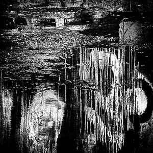 Reflections in Black and White