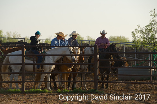 Gray Ranch Branding  2