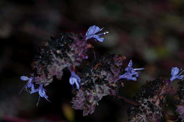 4S Ranch ~ Flora