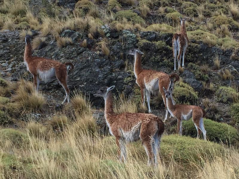 Patagonia18iphone-5876.jpg
