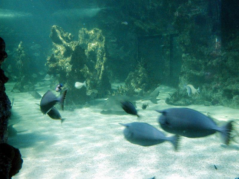 49.  Sydney Aquarium.JPG