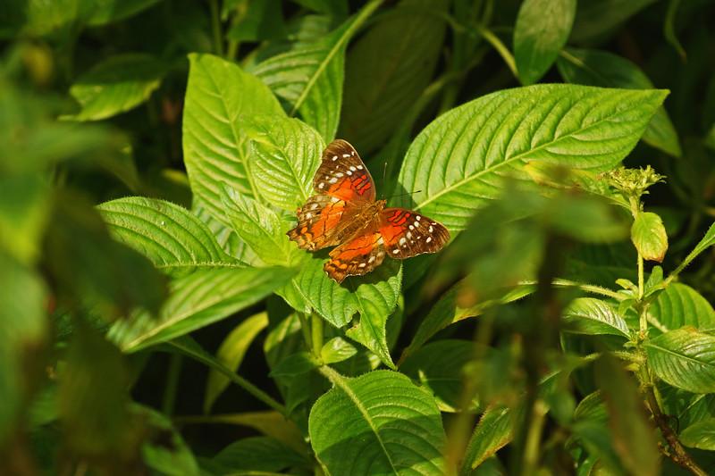 Nature 7.jpg
