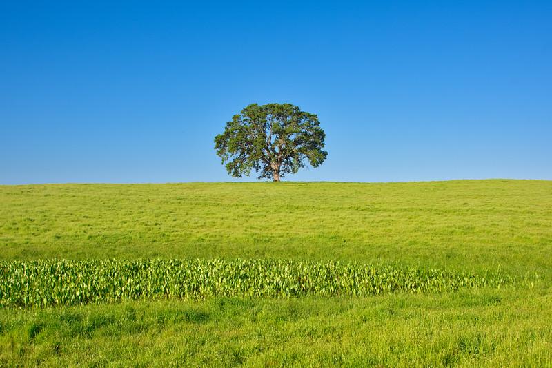 Lone Tree Luminar_DSC4249.jpg