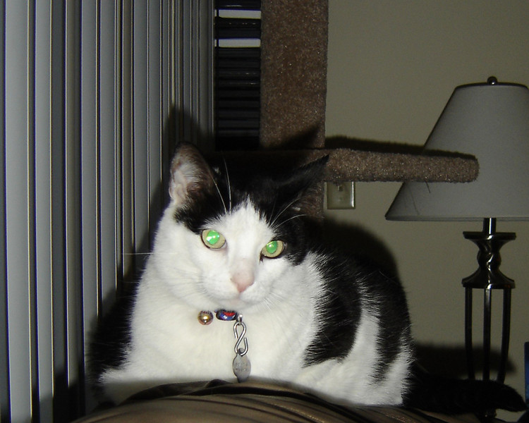 2007 06 22 - Cats 15.jpg