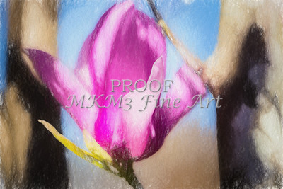 Tulip Tree Blooms Paints for Canvas Prints