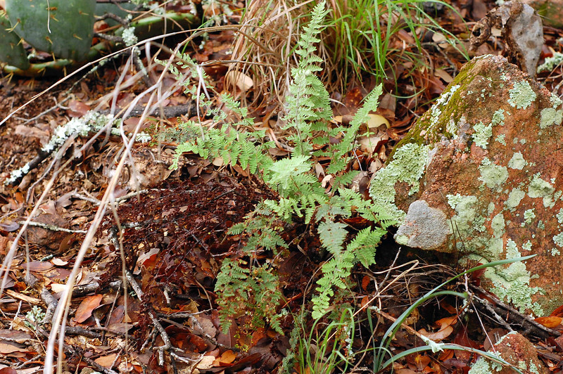 There were ferns growing along side cacti in some parts, very interesting.