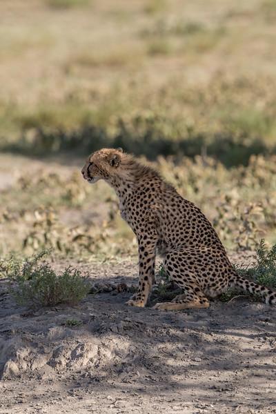 Tanzania_Feb_2018-67.jpg