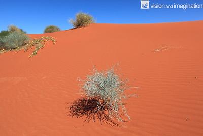 Dune Plants (Desert)