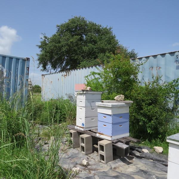 no 1 and no 2 hives.JPG