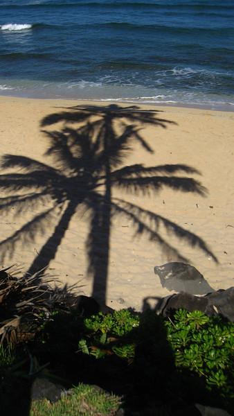 Morning Palm tree shadow on the Beach
