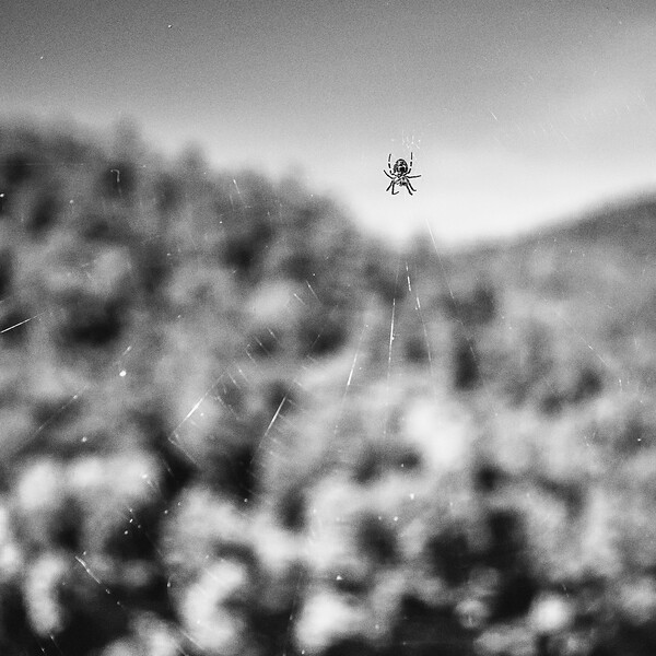 One of the many hundreds of spiders along the James River Foot Bridge