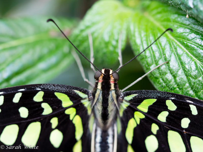 140503_ButterflyHouse_285.jpg