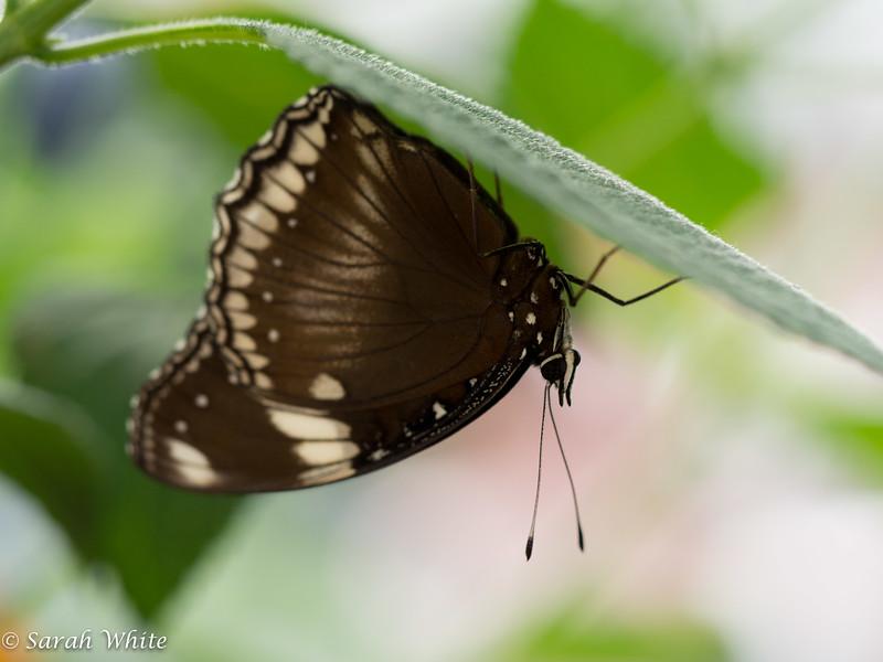140503_ButterflyHouse_467.jpg