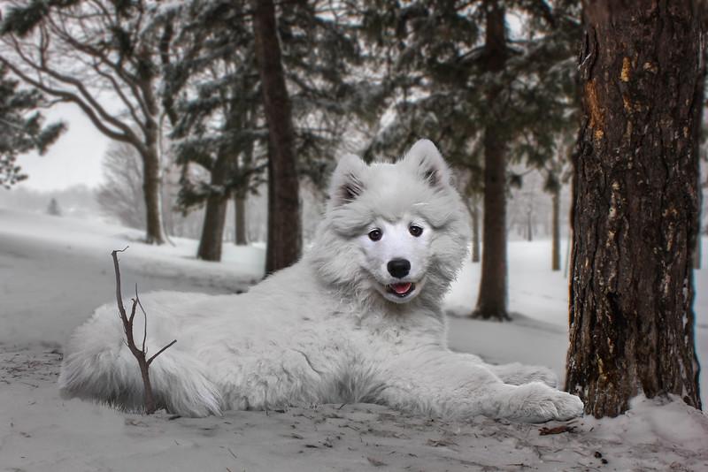 White-furry-1.jpg