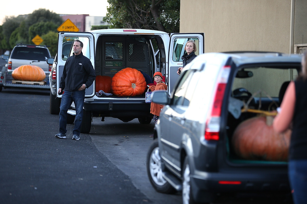 . Contestants wait to have their pumpkins weighed during the 40th Annual Safeway World Championship Pumpkin Weigh-Off on October 14, 2013 in Half Moon Bay, California.  (Photo by Justin Sullivan/Getty Images)