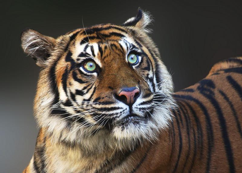 TIGER 3.jpg