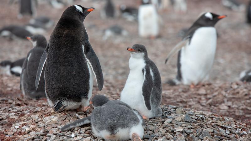 2019_01_Antarktis_01152.jpg