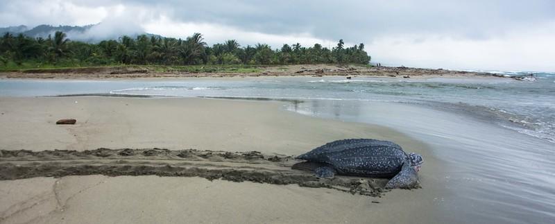 Turtle Rescue long-1.jpg