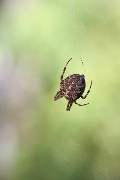 9130 Spider.JPG