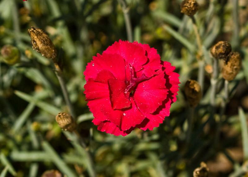 2009 06 30_NY Botanical Gardens_0660_edited-2.jpg