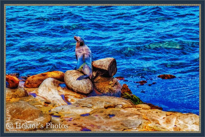 Sand Diego-32.jpg