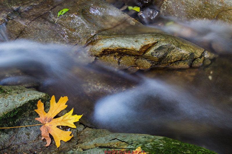 Fall color Fall streams Napa California 1