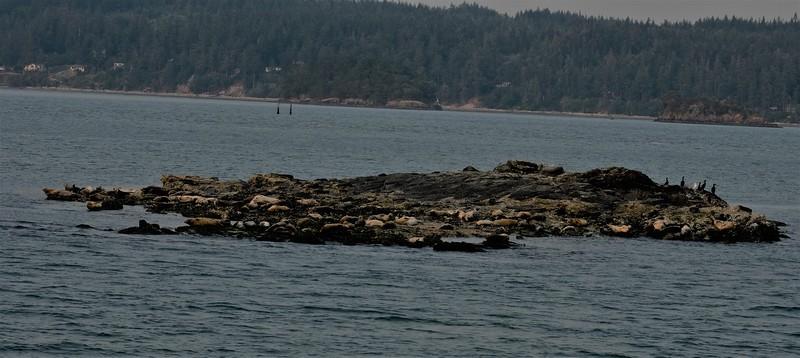Rock with Seals .JPG