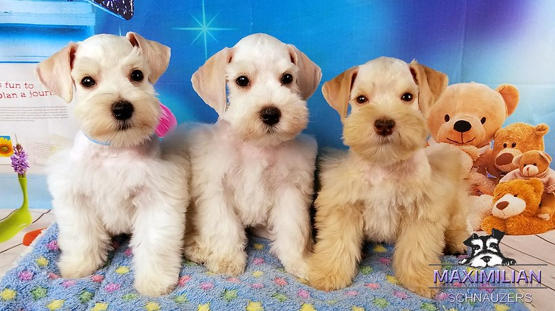 Jasmine Pups 014.jpg