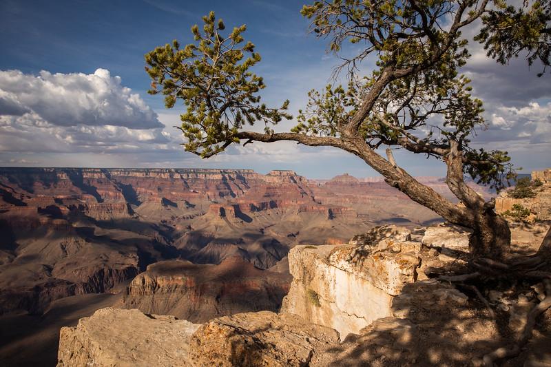 WVWS_Grand Canyon South Rim-5178.jpg