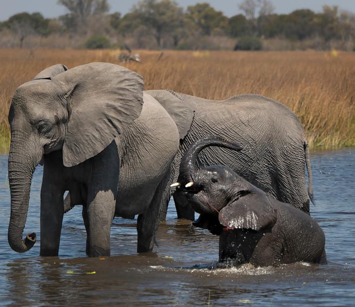 2014-08Aug-Okavango Masters-79-Edit.jpg