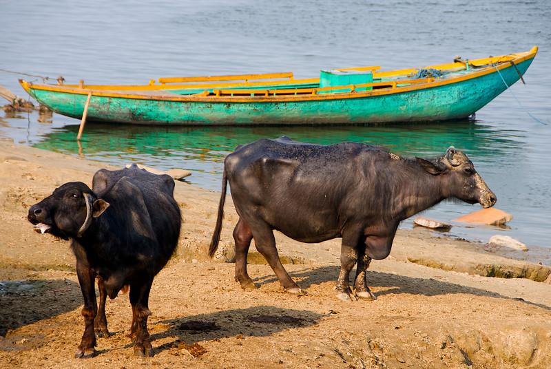XH-INDIA-20100223A-501A.jpg