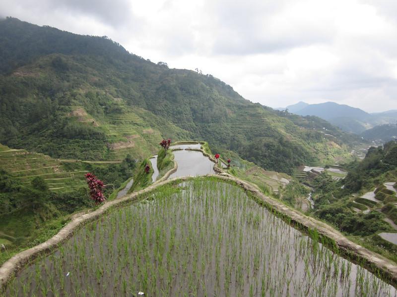 Atop Rice Terraces in Banaue