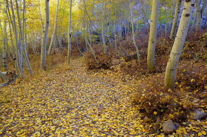 Aspens, Afternoon