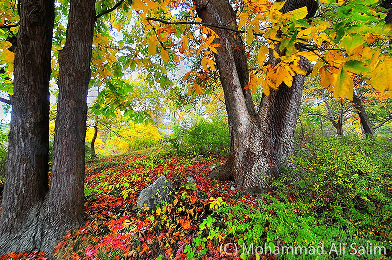 Autumn Trees in Harriman edit web.jpg