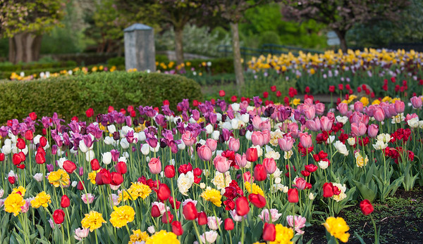 Botanical Park Spring 2015