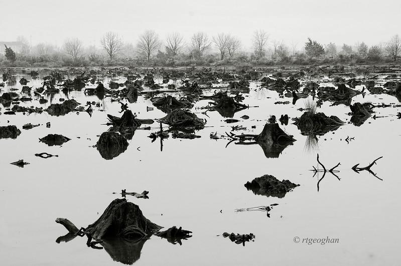 Dec 8_Mill Creek Marsh BW_2647.jpg