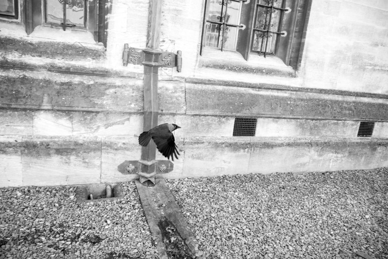 The Crow in Oxford F4738.jpg