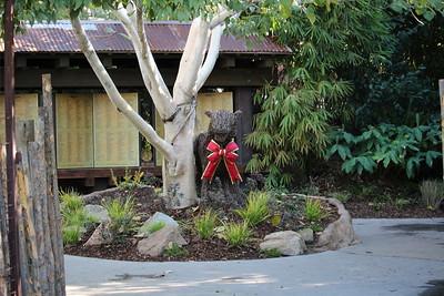 SD Wild Animal Park 2015-12-15