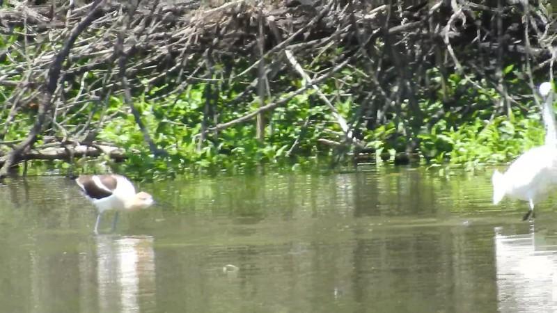 Belmar Birds (12).MOV