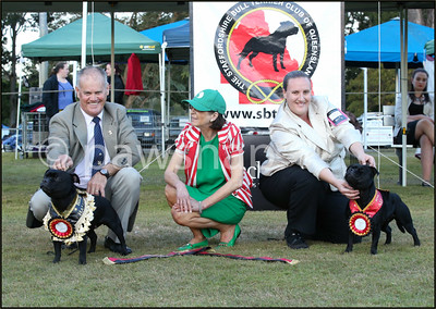 Stafforshire  Bull Terrier Club of Qld Specialy Show