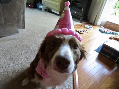 Lupine's 2nd birthday